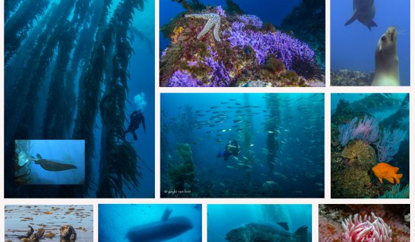 Southern Channel Islands Diving Adventure for Advanced Divers