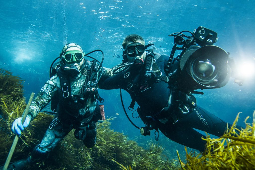 Channel Islands Diving