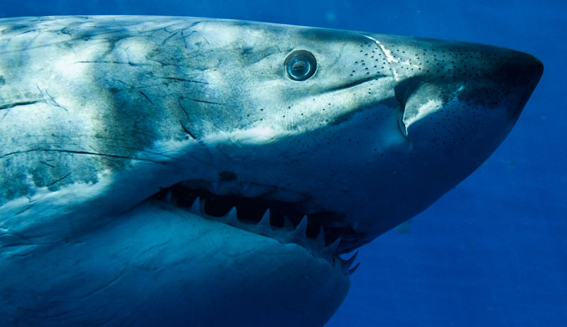 Discovery Channel Filming Shark Week With Fake Sharks?