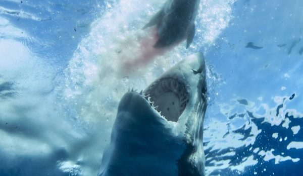 Shark Week 2019 Your Guide To 18 Shark Shows