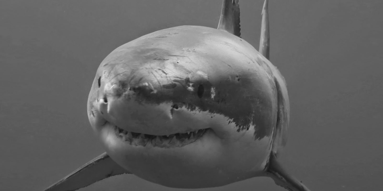 "THE ULTIMATE ""SHARK TRIP"" FOR DISCOVERY CHANNEL'S SHARK WEEK 2019"