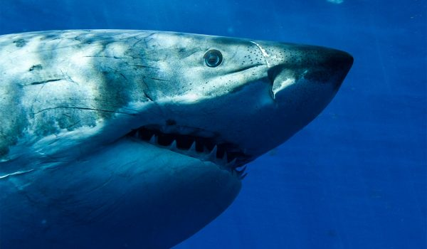 Shark Week 2019 Updates All The Shark News Here