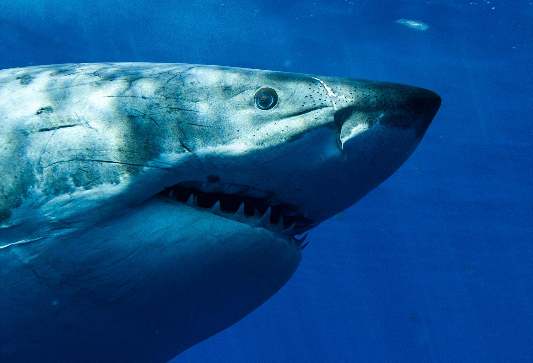 Shark Week 2019 Updates All The Shark News Here