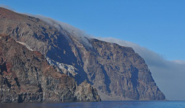 Guadalupe Island Cage Diver Travel Guide 2019