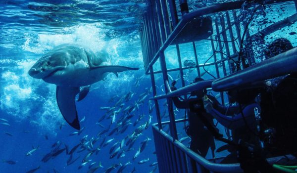 2021 Guadalupe Island Great White Shark Diving #6